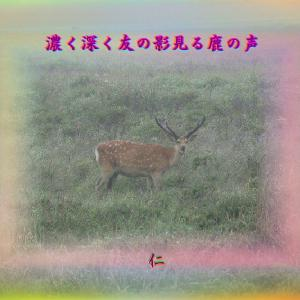 フォト青のくさみ575『 濃く深く友の影見る鹿の声 』zqr0601
