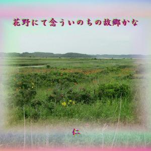 『 花野にて念ういのちの故郷かな 』フォト瘋癲老仁妄句zqp1702