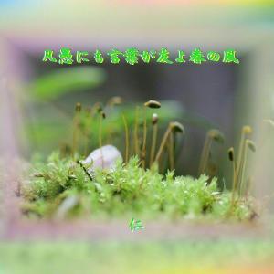 『 凡愚にも言葉が友よ春の風 』TAO交心yxx2001