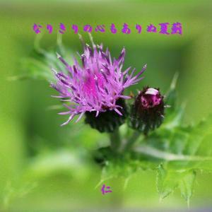 『 なりきりの心もありぬ夏薊 』言葉あそび575交心yqr0710