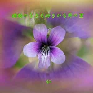 フォト575あそび『 躍動のなきも好きかな野の菫 』ywx1201
