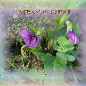『 良寛坊友でいてよと野の菫 』良寛さんとあそぶysw1304