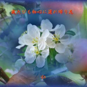 『 幾たびも初心に還れ返り花 』一休さん「森女游泳」575yxp1601