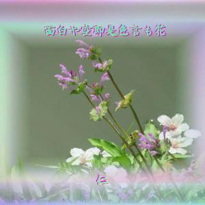 『 面白や空即是色言も花 』言葉あそび575交心yvn0505