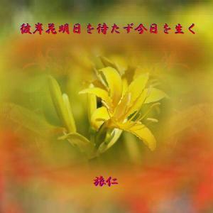 フォト575あそび『 彼岸花明日を待たず今日を生く 』xzn0201