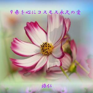 フォト575あそび『 9条を心にコスモス永久の愛 』zsn2901