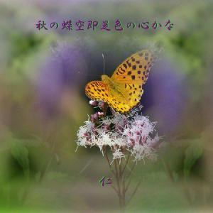 フォト575あそび『 秋の蝶空即是色の心かな 』zpy0701