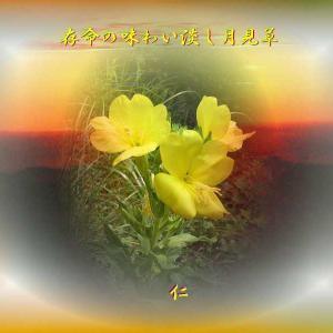 フォト575あそび『 存命の味わい淡し月見草 』yxp1803