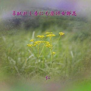 フォト575あそび『 草臥れし吾にも靡け女郎花 』yxp0504