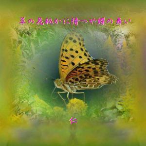 フォト575あそび『 草の花私かに待つや蝶の舞い 』ywn0802