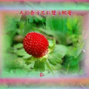 『 人に会う己に習う蛇苺 』一休さんをあそぶ575yzr3001