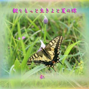 『 翻りもっと生きよと夏の蝶 』一休さんをあそぶ575yxr0201