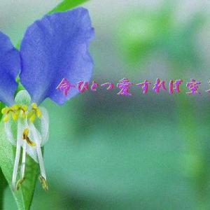 フォト575あそび『 命ひとつ愛すれば空草の花 』syahai860