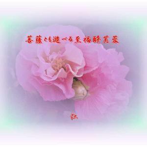 フォト575あそび『 菩薩とも遊べる至福酔芙蓉 』vys3001