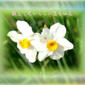 『 擬えて老いらくの恋水仙花 』一休さんをあそぶ575xyt1903