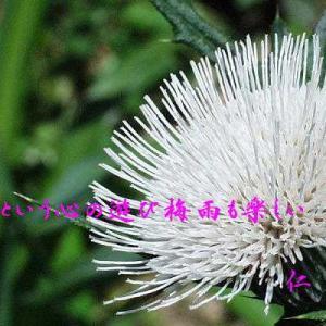 フォト一行詩『 回春という心のあそび梅雨も楽しい 』vys2501