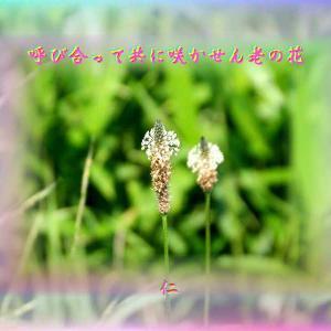 あそび心575『 呼び合って共に咲かせん老の花 』xys2601