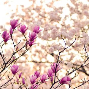 アトピー・肌荒れが春に悪化しないために冬の間にしておくこと