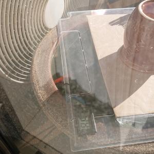 金魚 ベランダ睡蓮鉢で日向ぼっこ