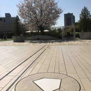 阪急西宮球場ホームベースと桜 (*´ω`*) ガーデンズ屋上より