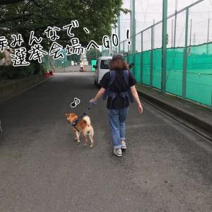 保護犬と東京都都知事選に行ってきた