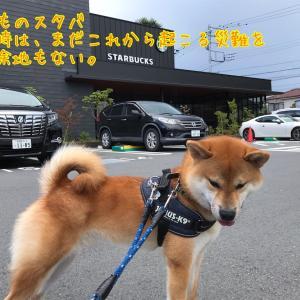 【犬の散歩必需品】う○ち袋を忘れた事件と諸々