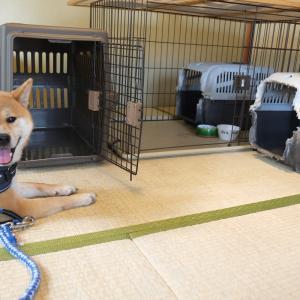 柴犬のクレート(3台目はアイリスオーヤマ)