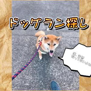 東京都小平市にあるドッグラン「大本命は、たけのこ公園!」の巻