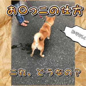 犬のおしっこの仕方の巻