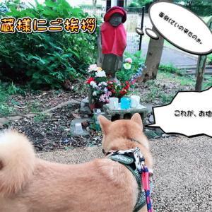 台風10号の影響で外の異変に気付く柴犬の巻