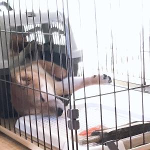 犬の寝相の巻