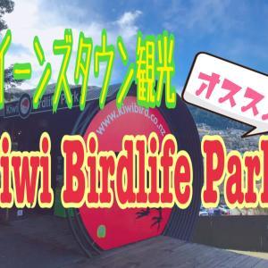 【クイーンズタウン観光】おすすめのキーウィ バードライフ パークを紹介!動く本物のキーウィに会える場所!
