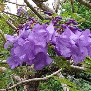 フラワーパーク「青い花祭り」