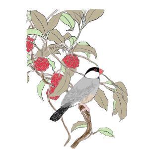 本日文鳥づくし(秋の文鳥描いた)