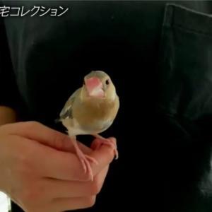 瑛太と木村カエラ夫妻が桜文鳥を飼っているらしい。(夏休みの計画を立てた)