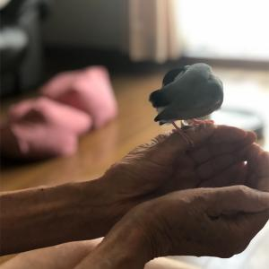 老人と文鳥(じいちゃんばあちゃんってのはすごい)