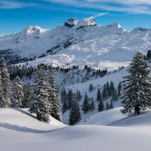 20年ぶりにスキーをしてみた【ふじまるの身体は覚えています】