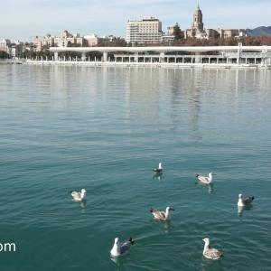 【Vlog #5 】スペイン・マラガの港を散策 ‐Muelle Uno en Málaga, España‐