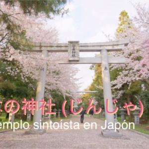 【日本語/Japonés #4】桜満開の神社 -Un templo sintoísta en Japón-