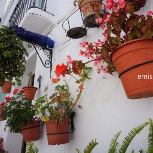 著者『愛しのアンダルシアを旅して 南スペインへ』裏話