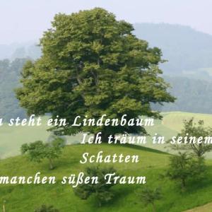 ドイツ語いろいろ~シューベルトの Der Lindenbaum『菩提樹』