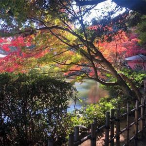 【2019】山口県下関市 長府庭園の紅葉【11月21日】