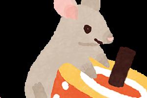 子年は Year of the Rat それとも Mouse?