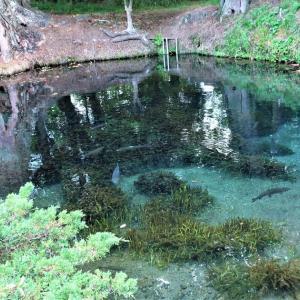 【忍野八海その1】池の透明度と色がすごい!駐車場情報と涌池、中池編