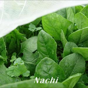今週の冬野菜