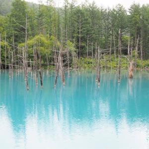 夏の富良野・美瑛・洞爺湖2日め1 <神秘的な青い池>
