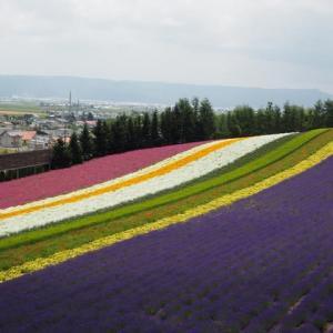 夏の富良野・美瑛・洞爺湖3日め1 <ファーム富田のお花畑に感動>