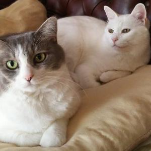 世界のかわいい猫たち