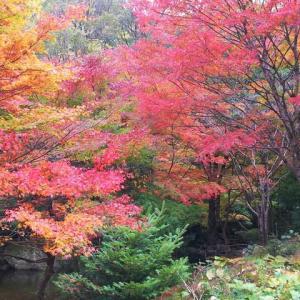 道後温泉と紅葉<滑床渓谷の紅葉と世界一のピザ>