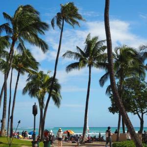 ANAのA380 ホヌのファーストでハワイに行く計画♪